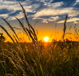 Zomer vijfdaagse | Breng de zon in je leven