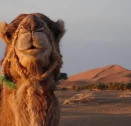 Bewuste vakanties - Sahara-Marokko: wandelen met kamelen