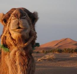 Bewuste vakanties - Marokko: kamenlentrektocht Sahara