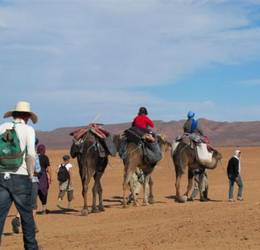 woestijn kamelen