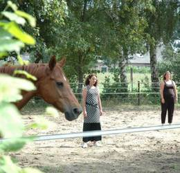 Inisghts Discovery met Paardencoaching