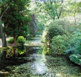 Spirituele Bos- en Bomen-2-daagse in Nat. Park.