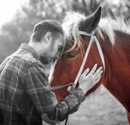 Mens en Paard | Human Design en Paardencoaching