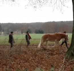 Stiltewandeling met paarden individueel