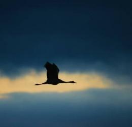 Meditatie Sense of Silence