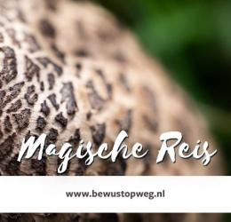 Magische Reis - truffelceremonie